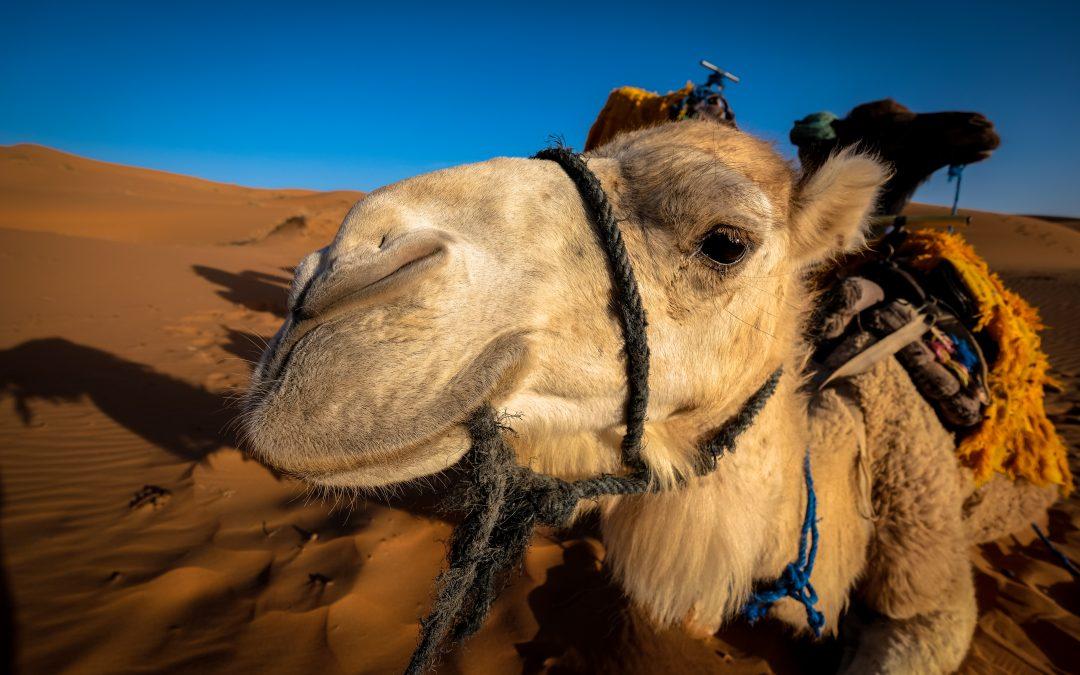 Een schrijfcoach als schip der woestijn